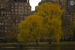 Colors of Fall (Usman Ghafoor Photo) Tags: trees lake fall boston landscape freedomtrail colorsoffall 70mm beautifultrees orangeyellowleaves canon7d usmanghafoorphoto