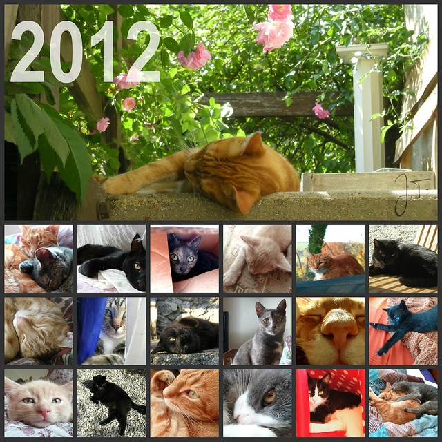 Couverture calendrier chats 2012