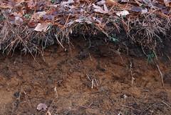 sandy kame soil (ophis) Tags: sand soil kame hinckley soilprofile