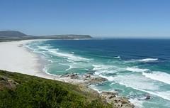 Küste bei Noordhoek, NGIDn629915074 (naturgucker.de) Tags: southafrica capepeninsula naturguckerde sdafrika crainermnke ngidn629915074