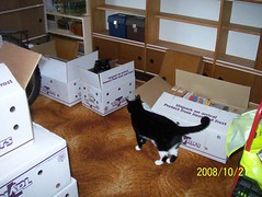 I want a box too ... (wallygrom) Tags: england cats cat westsussex box plumbing wallace boxes 2008 gromit eastpreston buildingwork wallacegromit