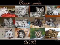 Bonne anne 2012 (home77_Pascale) Tags: cat chat fte carte 2012 chaton voeux ecard calendrier bonneanne cartevirtuelle mygearandme mygearandmepremium mygearandmebronze