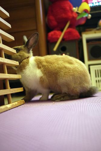 兔-NANA_29