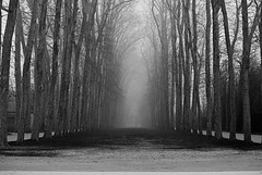 Le Jardin de Versailles (A FUTURE FOTO) Tags: trip travel winter vacation bw white holiday black paris france castle garden photography grey blackwhite nikon europe december jardin versailles iledefrance chteau semester d80