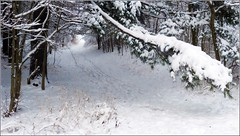 Winter Snow Path (blmiers2) Tags: park trees winter white snow cold nature landscape nikon path explore coolpix 2012 s3000 explored blm18 blmiers2
