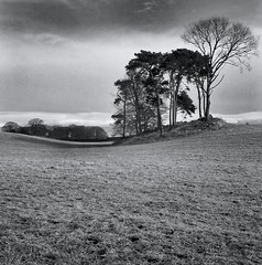 Curve (polarisandy) Tags: wood uk trees sky blackandwhite bw cloud white black tree tlr film monochrome field grass bar clouds forest vintage mediumformat square landscape grey aperture woods flickr iso400 country 66 valley 400 cumbria squareformat vintagecamera patterson environment medium groundlevel ilford ilforddelta400 fell pennines twinlensreflex rolleicord selenium delta400 selfdeveloped edenvalley elp homedeveloped 35f fromtheground dodgeandburn fellside frankeheidecke ilfostop givenlight existinglightphotography helmwind helmbar ilfosol3 silverfx polarisandy aperture3