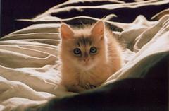 Animals (Janis Ganga) Tags: camera winter light sun france cute film animals cat 35mm canon photography kitten fuji ae1 superia 200asa