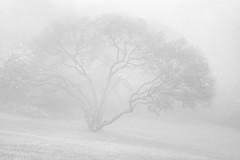 IMG_3996mono (ManFromOz) Tags: mist mono blackheath bluemountains highkey geoffsmith gemaxphotographics