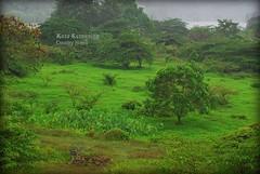 (Micartttt) Tags: camera green digital nikon scenery malaysia dslr alam countrycountry micarttttworldphotographyawards micartttt michaelchee hometreeecoshah