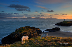Llanddwyn sunset (Rory Trappe) Tags: sunset sea horses mountains beach wales clouds llanddwyn anglesey rafvalley sirfon