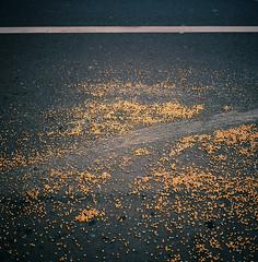 Popcorn Seeds -- Alameda, CA (kzamani) Tags: road street abstract texture corn flat stripe line seeds popcorn kodakektar100 mamiya675mmf35g