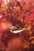 Fish Portrait 3 (Lauren Barkume) Tags: africa red vacation portrait fish seaweed color southafrica aquarium december underwater ct bubbles capetown kelp spotted puffer westerncape 2011 laurenbarkume gettyimagesmeandafrica1