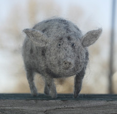 spotted pig (vriad_lee) Tags: pig felting felt sow needlefelted