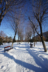 (**Alice**) Tags: park trees winter snow cold bench wideangle bluesky romania 1020mm parc copaci romnia zpad iarn banc cersenin braov