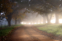 Autumn avenue (nathankaso) Tags: morning autumn mist fall fog australia victoria porepunkah