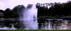 BREMEN.- Büergerpark. Panorama con gaviotas. (Bernardo del Palacio) Tags: reflection colors reflections germany contraluz moments searchthebest screensaver brugge santiagodecompostela reflejo bruges bremen reflexions breathtaking brujas caminodesantiago reflejos amazingcolors reflects autunm astorga antoniogaudí smörgåsbord dinnerandamovie straightfromcamera blueribbonwinner artisticexpression reflejada buergerpark digitalcameraclub supershot 5photosaday kartpostal golddragon the4elements abigfave totalawesomeness anawesomeshot colorphotoaward aplusphoto isawyoufirst deniscollette superbmasterpiece flickraward diamondclassphotographer amazingamateur theunforgettablepictures brillianteyejewel colourartaward betterthangood goldstaraward excapturemacro academyofphotographyparadiso thebestpicturegallery explorewinnersoftheworld alwayscomment5 qualitypixels damniwishidtakenthat breathtakinggoldaward awesomeblossoms 100commentgroup jediphotographer inspiringgallery photoartbloggroup berpala dragondaggerphot dragondaggerphoto dragondaggerawards reflejoscatedraldeleón distinctflowers reflectionslovers awardreflections