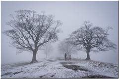 Mist and Snow (Maria-H) Tags: mist snow winter lyme park disley stockport england uk panasonic gh2 dmcgh2 14140 leuropepittoresque cheshire