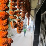 "Marigolds in Darjeeling <a style=""margin-left:10px; font-size:0.8em;"" href=""http://www.flickr.com/photos/14315427@N00/6829362239/"" target=""_blank"">@flickr</a>"