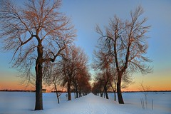 Winter scenes in Ottawa (beyondhue) Tags: ottawa winter scene snow landscape row trees bare sunset light sky path road closed ontario beyondhue canada night