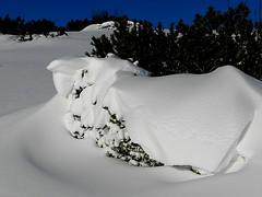 2012 Latsche im Schnee