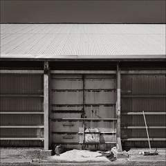 skipton-1939-bw-dt-ps-w (pw-pix) Tags: bw blackwhite doors grain shed australia victoria storage silo facility toned duotoned broom corrugated skipton galvanised westernplains centralvictoria westernvictoria usedtobeontherailnetwork nowarailtrail lismoreskiptonrd