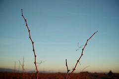 (www.jmwork.com) Tags: france rural countryside europe village languedoc fa minervois languedocroussillon siran vitisvinifera