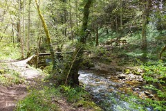 Una visita obligada para disfrutar del  bosque (Lumiago) Tags: españa naturaleza río puente spain burgos castillayleón espaciosnaturales esenciadelanaturaleza villabásconesdebezana