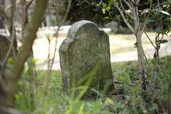 Cimitero degli animali (falco di luna) Tags: london londra cimitero animalidacompagnia cimiterodeglianimali