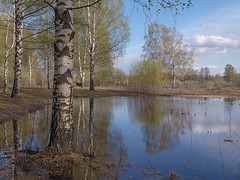 ordinary spring (Sergey S Ponomarev) Tags: trees sky primavera nature water clouds forest canon reflections landscape spring woods europe flood russia branches north may natura birch trunks paysage riflessi paesaggio nord russie maggio kirov 2016 russland         vyatka  70d    sergeyponomarev birchland ef24105f40l viatka  wjatka