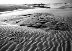 Lenis (felipe sahd) Tags: brasil noiretblanc lagoa maranho dunas barreirinhas lenismaranhenses 123bw