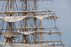 Sail drill 08 : Nipponmaru Japan (Colorful-wind) Tags: light shadow white japan port ship may fujifilm fukuoka lightandshadow sailingship mojiko nipponmaru 2016 kitakyusyu moji xti saildrill