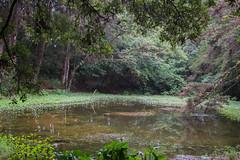 Laguna MonteDeLaCruz (Javier Montenegro Tijerino) Tags: montedelacruz costarica humedal