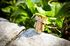 07 (Novafly) Tags: calendar danbo  danboard    2012danbodanboard