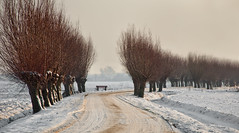 Winterse landweg - Wintry country road in the Netherlands (RuudMorijn) Tags: road trees panorama white mist snow cold tree nature water netherlands beautiful dutch field weather fog clouds rural season landscape outdoors countryside frozen spring bomen scenery frost december day branch view natural outdoor snowy background horizon country sneeuw seasonal scenic nederland meadow bank frosty scene row line willow freeze environment icy curve kale bewolkt willows brabant tranquil winters weg takken grijs houten noordbrabant kaal grauw brabants wilgen landweg tafereel drimmelen knotwilgen januarie besneeuwd sneeuwlucht slingerende
