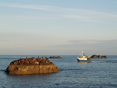 Shags on a rock (The Mucker) Tags: