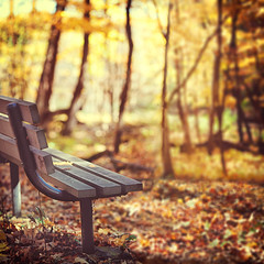 Autumn Reverie (pixelmama) Tags: california autumn fall leaves bench illinois bokeh aurora squareformat lostinthought emptybench themoodyblues foreverautumn redoaknaturecenter foxvalleyparkdistrict autumnreverie 16daycaliforniasafari