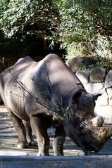 2011-12-04_10-36-55_ueno_zoo