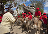 Donkey race for Maulidi - Lamu kenya (Eric Lafforgue) Tags: africa island kenya culture unescoworldheritagesite afrika tradition lamu swahili afrique eastafrica quénia lafforgue ケニア quênia كينيا 케냐 111952 кения keňa 肯尼亚 κένυα tradingroute кенијa