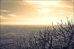 hivern  ·  invierno (ricardestruch) Tags: nikon paisaje fred árbol invierno arbre frio paisatge branques hivern baixllobregat santboi