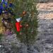 360_Trees_2011_158