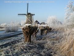 winterwonderland (annetje2009) Tags: winter snow nature sneeuw natuur naardermeer