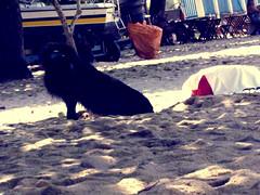 Cavando um Buraquinho (Mariah Carvalho) Tags: areia cachorro buraco cavar