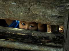 Big eyes (tomas belardi) Tags: thailand big eyes with explorer tomas those       belardi