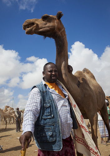 Livestock Market In Hargeisa Camel Trading One Man And Camel Somaliland