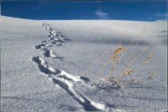 "tell ""tail"" trail... (laura's Point of View) Tags: winter sky snow cold tracks footprints lauraspointofview lauraspov"