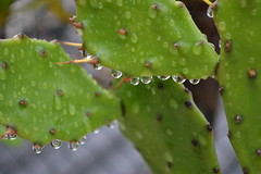 comeo de uma nova semana... Bom Dia a todos. (wanda gama) Tags: drops chuva gotas gotinhas brasilnikon
