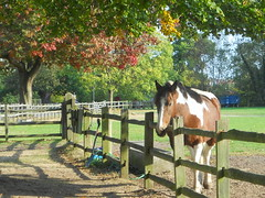 Happy horse at home says Hi : ) (davidezartz) Tags: uk greatbritain blue trees light red england sky horse orange brown white black green english home grass leaves sunshine yellow happy grey nikon shadows good branches fences short hi miles trunks dappled warwickshire novelist journalist maryanne wow1 s4000 coth supershot thegalaxy georgeelliot nikonstunninggallery abigfave 18191880 diamondclassphotographer flickrdiamond citrit platinumheartaward flickrestrellas natureselegantshots quarzoespecial damniwishidtakenthat artofimages platinumbestshot bestcapturesaoi bealivebetopbeseven mygearandme mygearandmepremium nikons4000 nikoncoolpixs4000 happyhorseathomesayshi rememberthatmomentlevel1