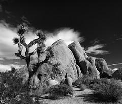 joshua tree (Eric C Bryan) Tags: sky blackandwhite rock clouds landscape nikon desert joshuatree mojave d700 ericbryan singhrayfilters leegndfilters ericbryanphotography wwwericbryannet ericcbryan ericbryannet