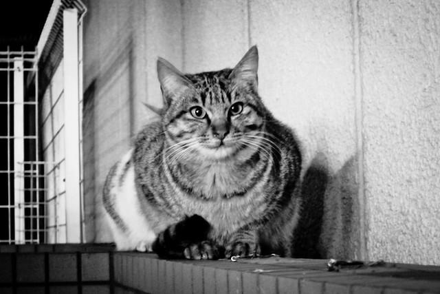 Today's Cat@2012-01-19