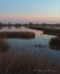 Sunset on the Marsh (CircadianReflections Photography) Tags: sunset reflections reeds nikon marsh willows coots 1735 sacramentonationalwildliferefuge nkkor cs5 ortoneffect d300s